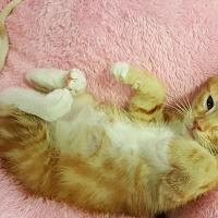Adopt A Pet :: Gypsy - Smyrna, GA