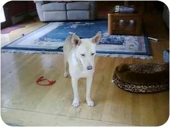 Shepherd (Unknown Type) Mix Dog for adoption in Braintree, Massachusetts - Peaches