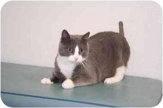 Domestic Mediumhair Cat for adoption in Smithtown, New York - Bernie Needs You