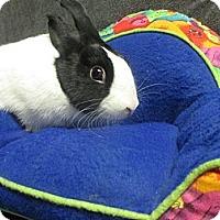 Adopt A Pet :: Mischa - Newport, DE