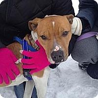 Adopt A Pet :: Coco #3 - Chicago, IL