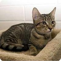 Adopt A Pet :: Simba - New Port Richey, FL