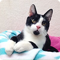 Adopt A Pet :: Oliver - Foothill Ranch, CA