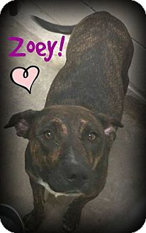 Pit Bull Terrier/Catahoula Leopard Dog Mix Dog for adoption in Bryan, Texas - Zoey