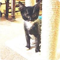 Adopt A Pet :: Morty - New  York City, NY