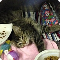 Adopt A Pet :: Snickers - Byron Center, MI