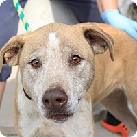 Adopt A Pet :: Miley - Martinsville, IN