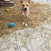 Adopt A Pet :: Percy - St. Clair Shores, MI