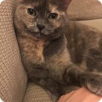 Adopt A Pet :: Simbiana (Simbi) - Crown Point, IN