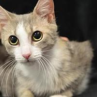 Adopt A Pet :: Phoebe170509 - Atlanta, GA