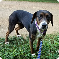 Adopt A Pet :: Libby - Richmond, VA
