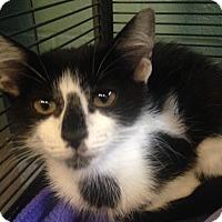 Adopt A Pet :: Yolanda - Sarasota, FL