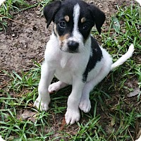 Adopt A Pet :: Mia - South Dennis, MA