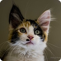 Adopt A Pet :: Ritsy - Meridian, ID