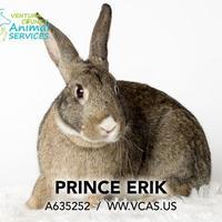 Adopt A Pet :: *PRINCE ERIK - Camarillo, CA