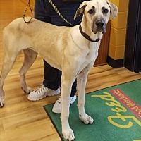 Adopt A Pet :: Sunshine - Little Rock, AR