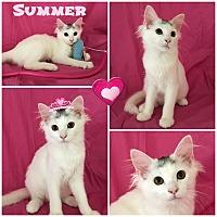 Adopt A Pet :: Summer - Jeffersonville, IN