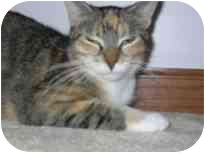 Calico Cat for adoption in Naperville, Illinois - Cleopatra