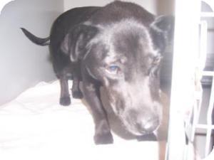 Terrier (Unknown Type, Medium) Mix Dog for adoption in Olathe, Kansas - Ethel