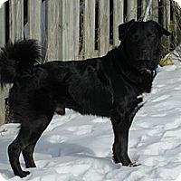 Adopt A Pet :: Jake - Hamilton, ON