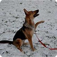 Adopt A Pet :: Della - Baltimore, MD