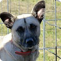Adopt A Pet :: Lady - Marlinton, WV