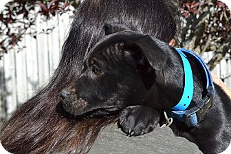 Rottweiler Mix Puppy for adoption in Acworth, Georgia - Mona Lisa - Paintings Litter