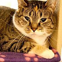 Adopt A Pet :: Jazzy - Asheville, NC