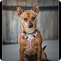 Adopt A Pet :: Ruth - Wickenburg, AZ