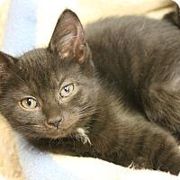 Adopt A Pet :: Gala - Medina, OH