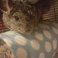 Adopt A Pet :: Sage - Lindenhurst, NY
