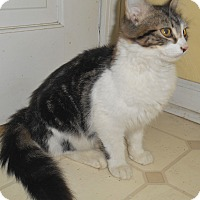 Adopt A Pet :: Jacob - Chattanooga, TN