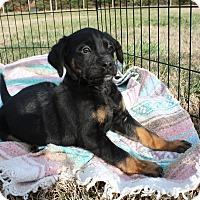 Adopt A Pet :: Saturn $250 - Seneca, SC