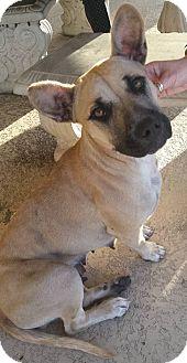 Black Mouth Cur Mix Dog for adoption in Savannah, Georgia - Nola