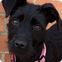 Adopt A Pet :: FRIDA (video) - Los Angeles, CA