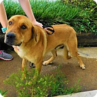 Adopt A Pet :: Bear-041218k - Tupelo, MS