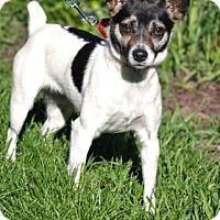 Adopt A Pet :: Abigail - Northbrook, IL