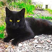 Adopt A Pet :: Grace - Knoxville, TN