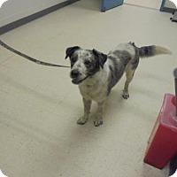 Adopt A Pet :: Sam - Gulfport, MS