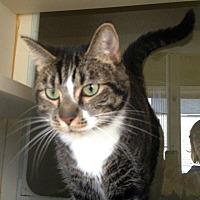 Adopt A Pet :: 17-279 Dori - Aberdeen, WA