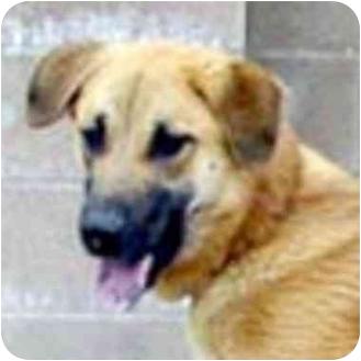 German Shepherd Dog Mix Dog for adoption in Berkeley, California - Riley