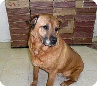 Mastiff Mix Dog for adoption in Bartonsville, Pennsylvania - SAMIE