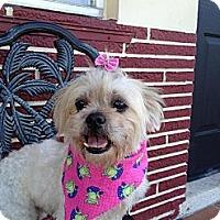 Adopt A Pet :: Jessie - Davie, FL