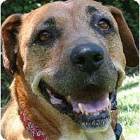 Adopt A Pet :: Sassy ('n Sweet) - Concord, CA
