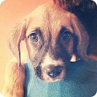 Adopt A Pet :: Hunter - WARREN, OH