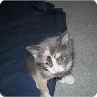 Adopt A Pet :: Willow - Morris, PA