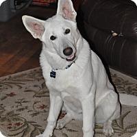 Adopt A Pet :: Bella - Hamilton, MT