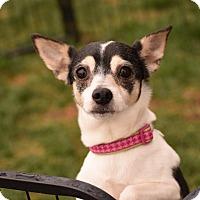 Adopt A Pet :: Cleo - Meridian, ID