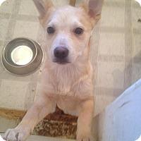 Adopt A Pet :: Starburst - Saskatoon, SK