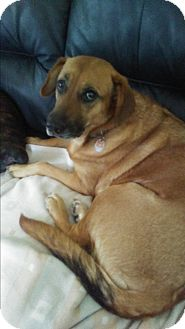 Collie/Shepherd (Unknown Type) Mix Dog for adoption in Northumberland, Ontario - Daisey